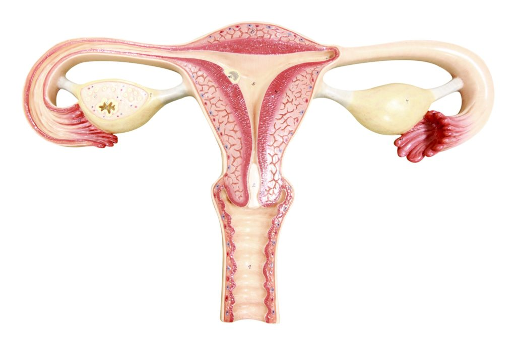 agenesia uterina ovarica