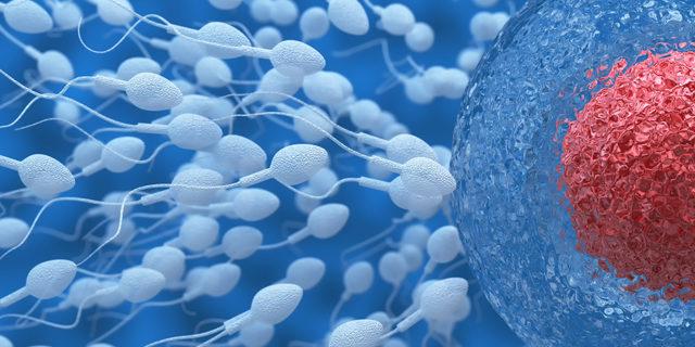Fertilità maschile: i pesticidi nei cibi ne aumentano i rischi