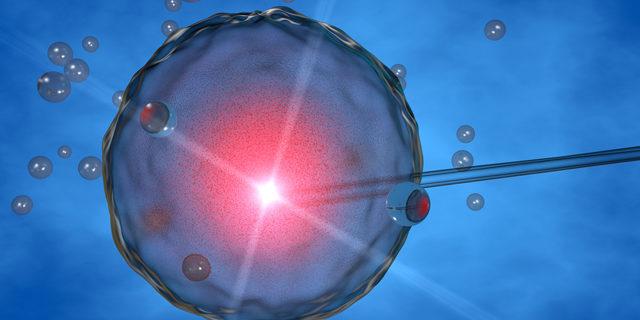 Comunicazione e interazione genetica fra madre ed embrione avvengono anche in caso di ovuli donati da terzi