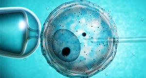 La prima gravidanza da tessuto ovarico trapiantato
