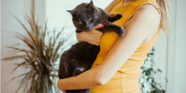 Gatti e toxoplasmosi in gravidanza: cosa c'è da sapere