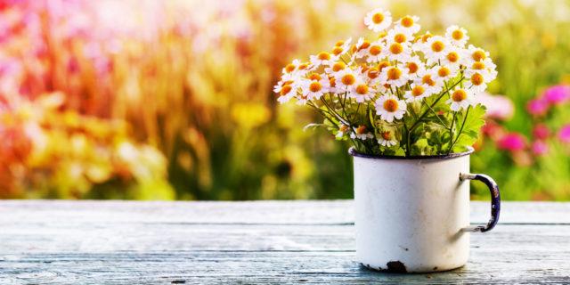Primavera e allergia, i consigli dell'esperto