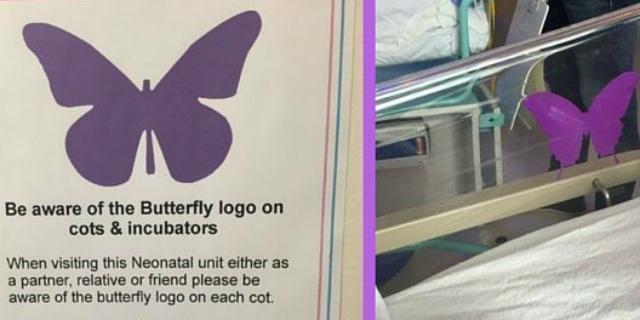 farfalla viola culla neonato