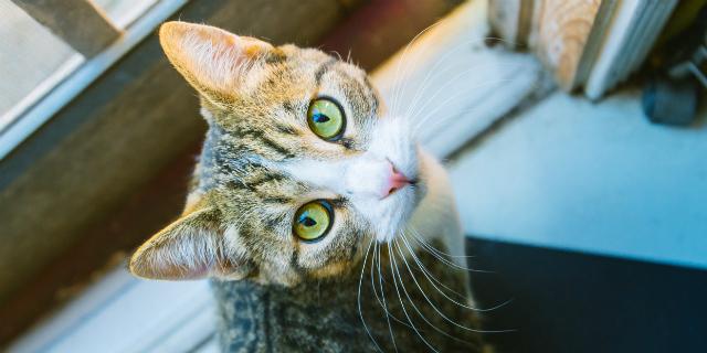 toxoplasmosi in gravidanza e gatti