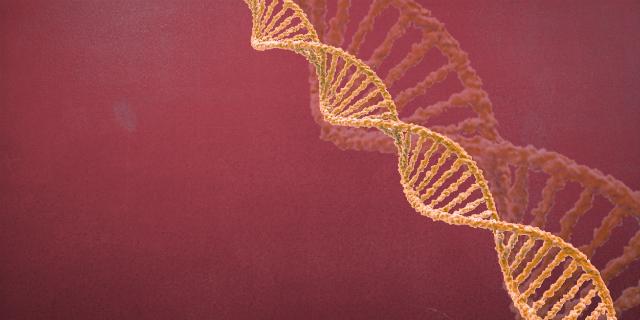 """""""Cosa comporta un'alterazione del cromosoma 3?"""""""
