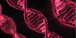 A cosa serve l'esame del cariotipo che studia il patrimonio genetico del feto