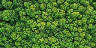 Perché Mellin pianterà un albero ogni 50 nuovi bambini nati