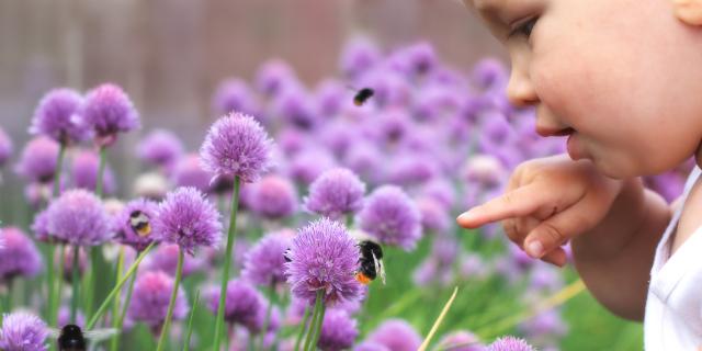 Punture di insetti e bambini: come distinguerle e quali sono i rimedi migliori