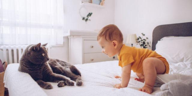 Gatti e neonati: rischi e benefici di una convivenza possibile