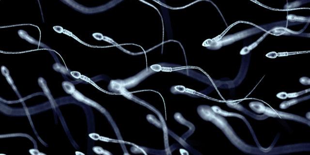 Necrozoospermia: cause e rimedi per la fertilità