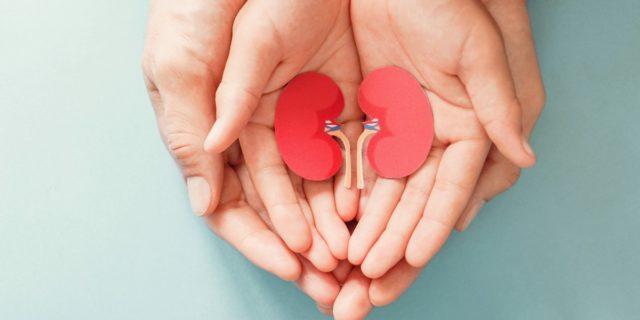 Agenesia renale: cosa comporta non avere uno o entrambi i reni?