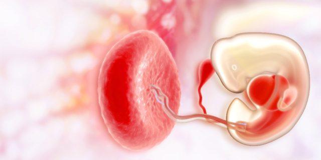 La placenta ha aberrazioni cromosomiche assenti nel feto, lo studio