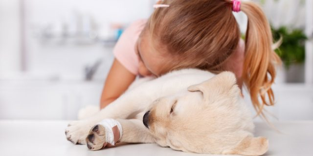 Pet therapy e bambini, tutti i benefici del metodo educativo inclusivo